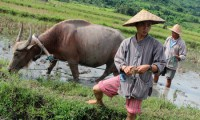 Learn all about the rice growing process in Living Land Farm