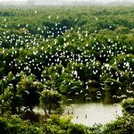 Tam Nong bird sanctuary