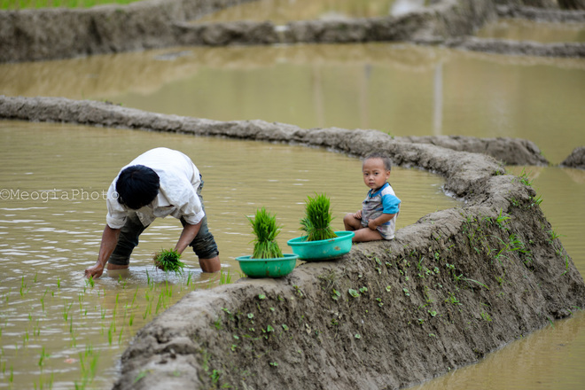Sometimes the images caught the boy sitting on the bank wise for parents working farm.