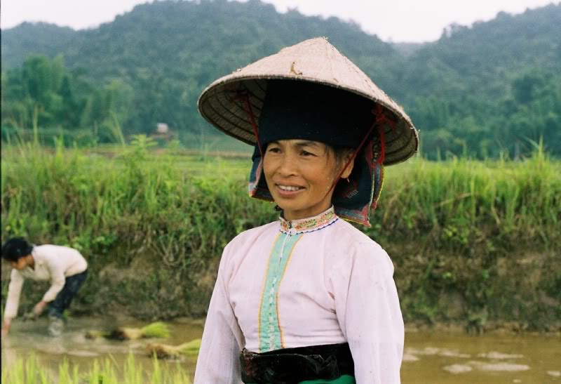 An ethnic woman on the rice paddy field