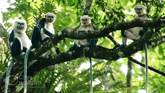 Animals in Cuc Phuong National Park