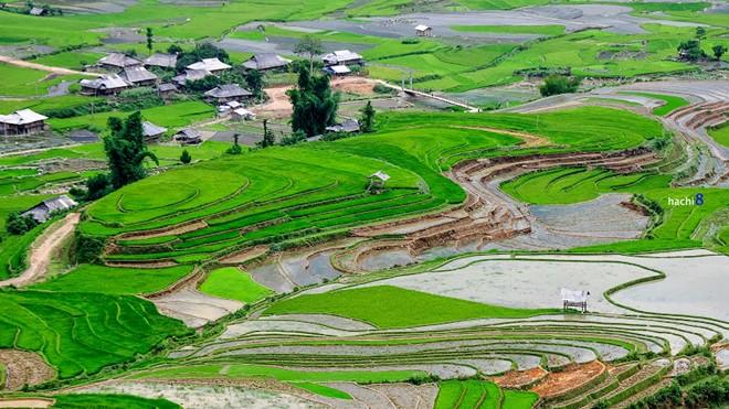 Lim-mong1