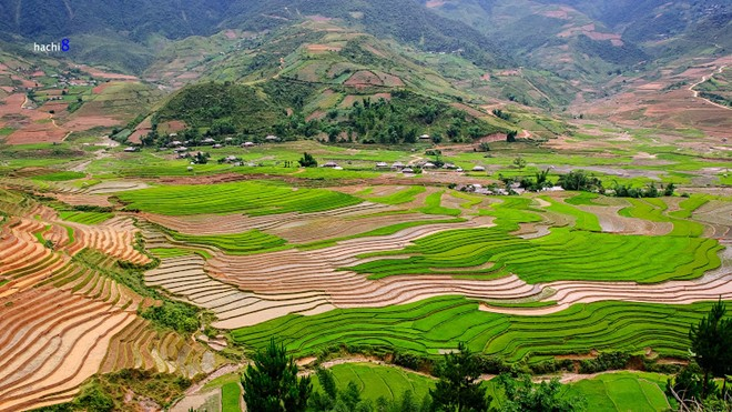 An Immense rice paddy field and stream under Cap Pha Valley.