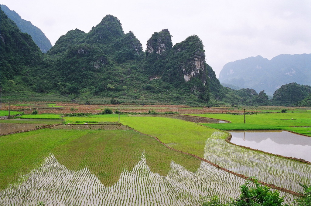 Rice paddy fields in Cao Bang province, Vietnam