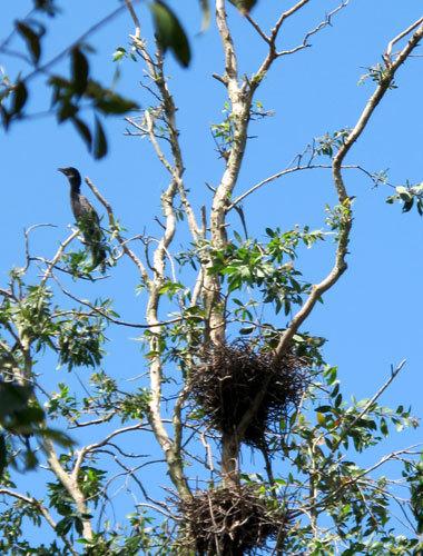 In the flood season, the birds flourish rapidly here.