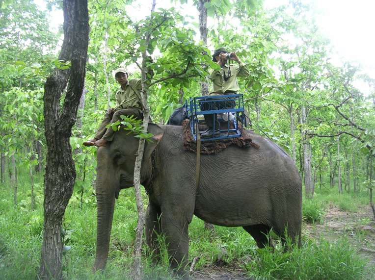 Two rangers Riding Elephant in Yok Don National Park