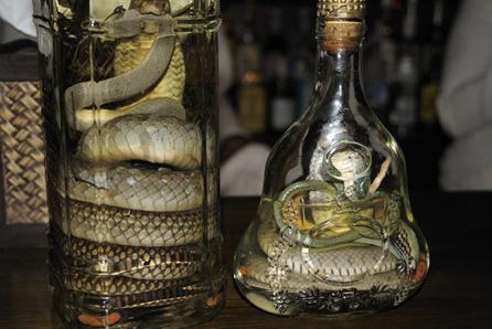 biggest-snake-whiskey-bottle-ever-seen