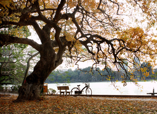 Government was made ​​yellow fall colors Hanoi, go into music poetry art, captivated his heart.