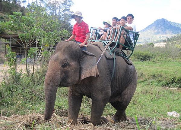A family riding elephant in Dalat
