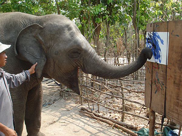 Elephant paiting picture at Phnom Tamoa Wildlife Recue Centre