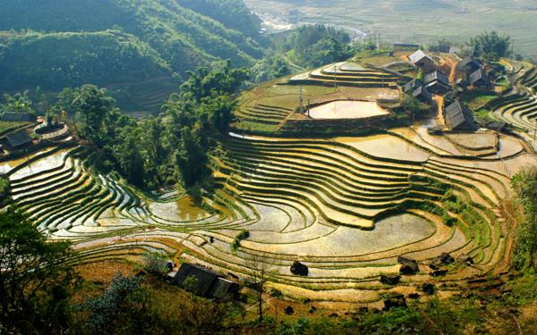 Terrace fields in Sapa