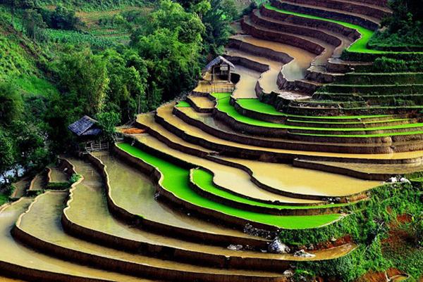 The scenery of the Sapa, Northwest of Vietnam
