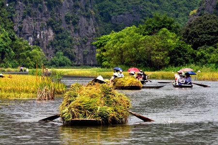 Locals with boats full of rices, Trang An