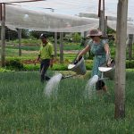 experience farming activities in hoi an