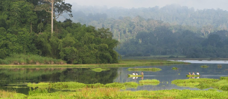 Crocodile Swamp in Nam Cat Tien park