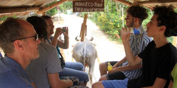 Enjoy buffalo cart ride in Hoi An