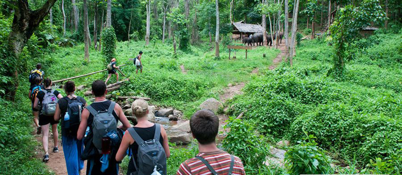 Image result for cuc phuong national park one day tour