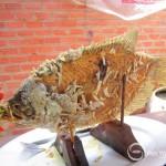 Gourami Fish Fry Ruffled