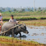 Hoi An Country Life Experience Tour