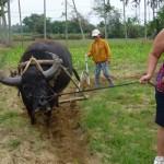 Hoi An Farming and Fishing Life Tour