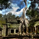 Old banyan tree roots on the roof of Ta Prohm Temple