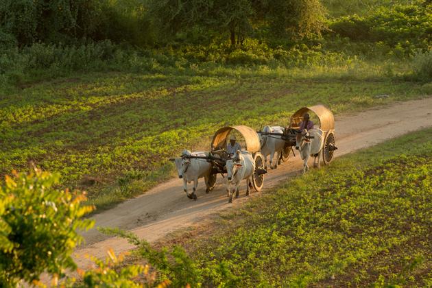 Ox cart riding in Kratie