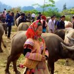 Sapa - Bac Ha Market Tour