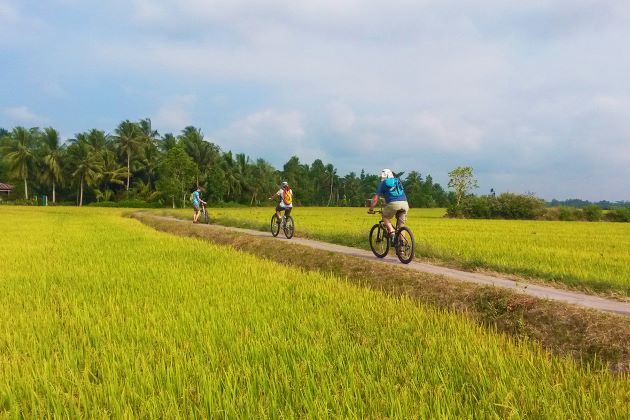 cycle through immense rice paddy