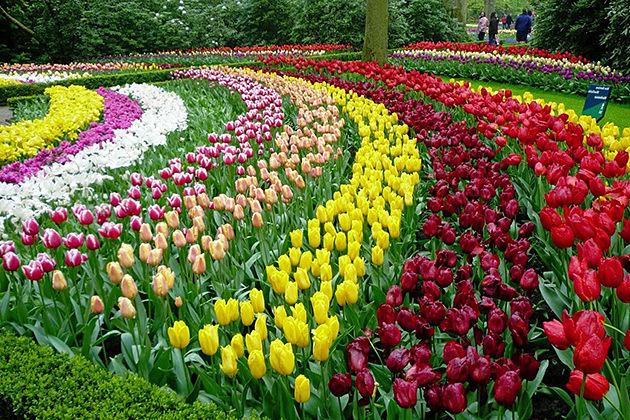 dalat flower garden southern vietnam highlight tour