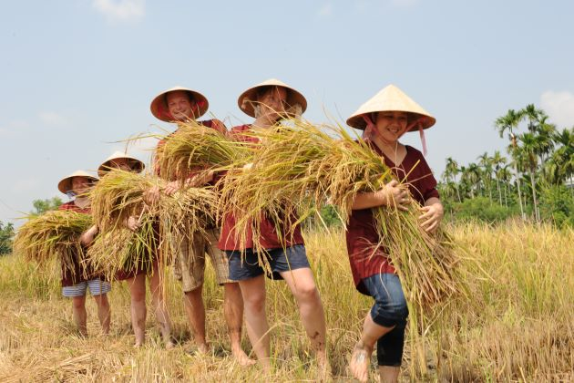 Experience Real Vietnam Wet Rice Farmer – From Tien Sa Port