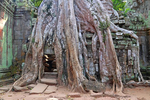 ta prohm temple in angkor thom