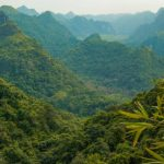 the forest area of cat ba national park
