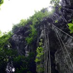 Lush green flora system near the cave