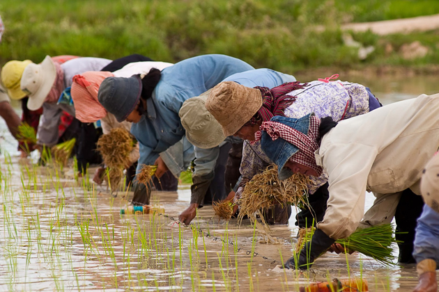 Mekong farmers working on fields thailand cambodia vietnam in 2 weeks