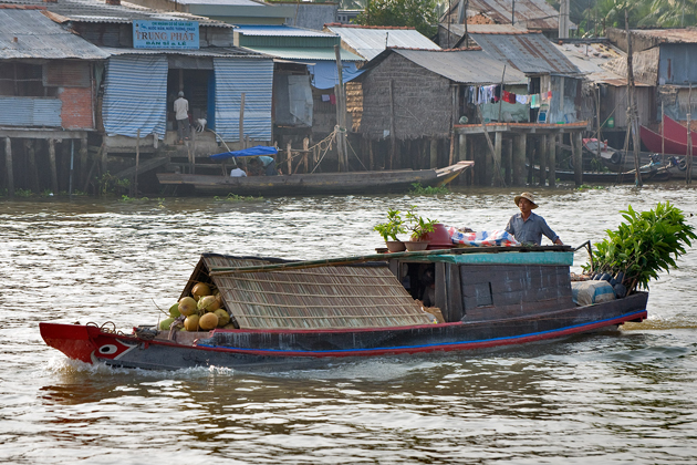 Boat with coconuts and bonsais in Cai Be Floating Market