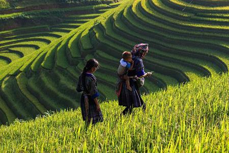 12 Day Friendly Vietnam Tour: Sapa trekking, Mekong Delta home stay
