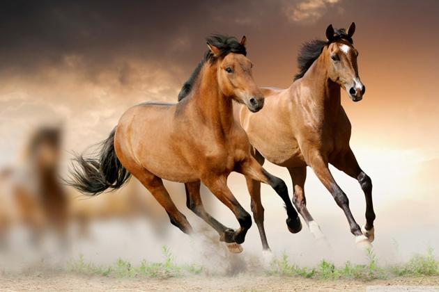 Vietnamese Zodiac Animals - Horse