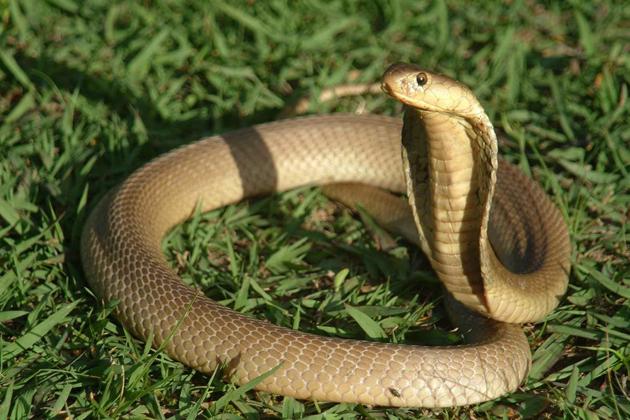 Vietnamese Zodiac Animals - Snake