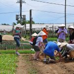 hoi an farming tour with family