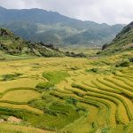 sapa rice terraces northern vietnam adventure