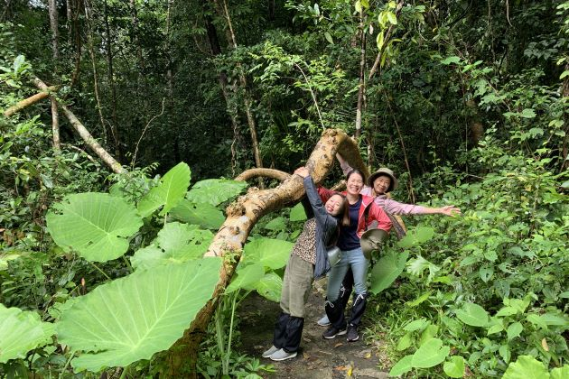 a big root in the forest of nam cat tien national park