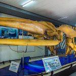 visit Vietnam Oceanographic Institute on nha trang city tour