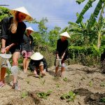do farmer work at thanh toan village