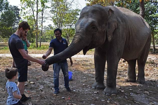 interact with friendly elephant at Phnom Tamao Sanctuary