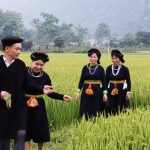 Tay people in the north of Vietnam