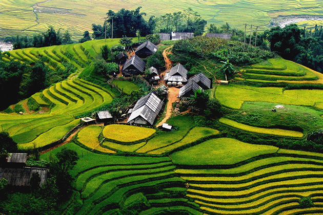 Terraced rice paddy fields grown by H'Mong people