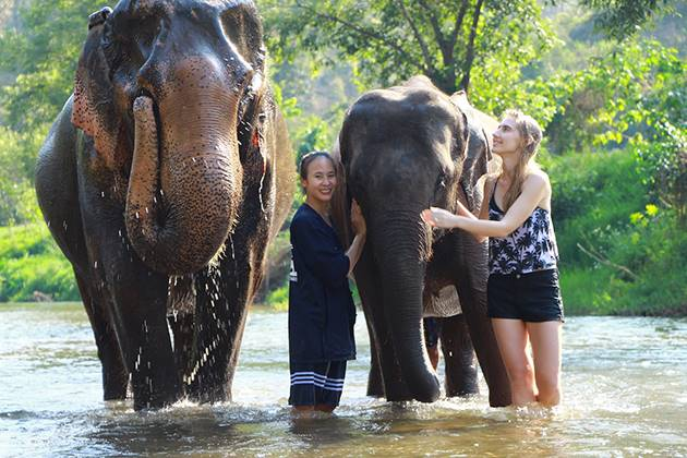chiang mai elephant experience thailand vietnam and cambodia tours