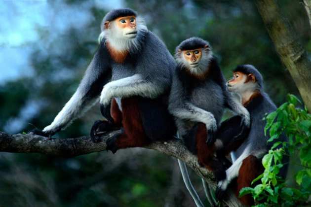 Wild animals in Cuc Phuong National Park