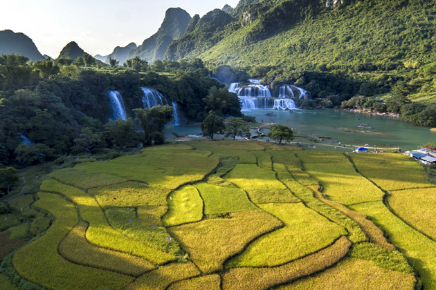 ban gioc waterfall and rice fields