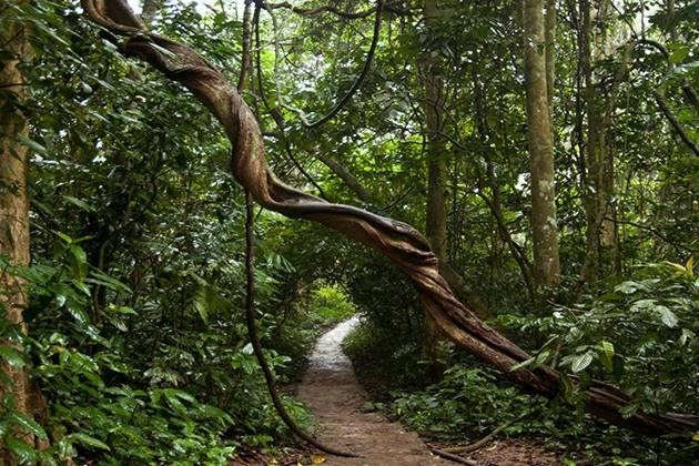 biodiversity of cuc phuong national park